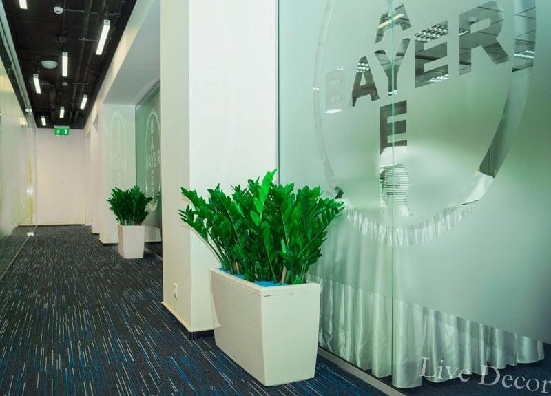 Сервисное обслуживание растений